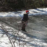 A girl glides across Dilks' Pond, one of many skaters and hockey players we spotted during the hike.