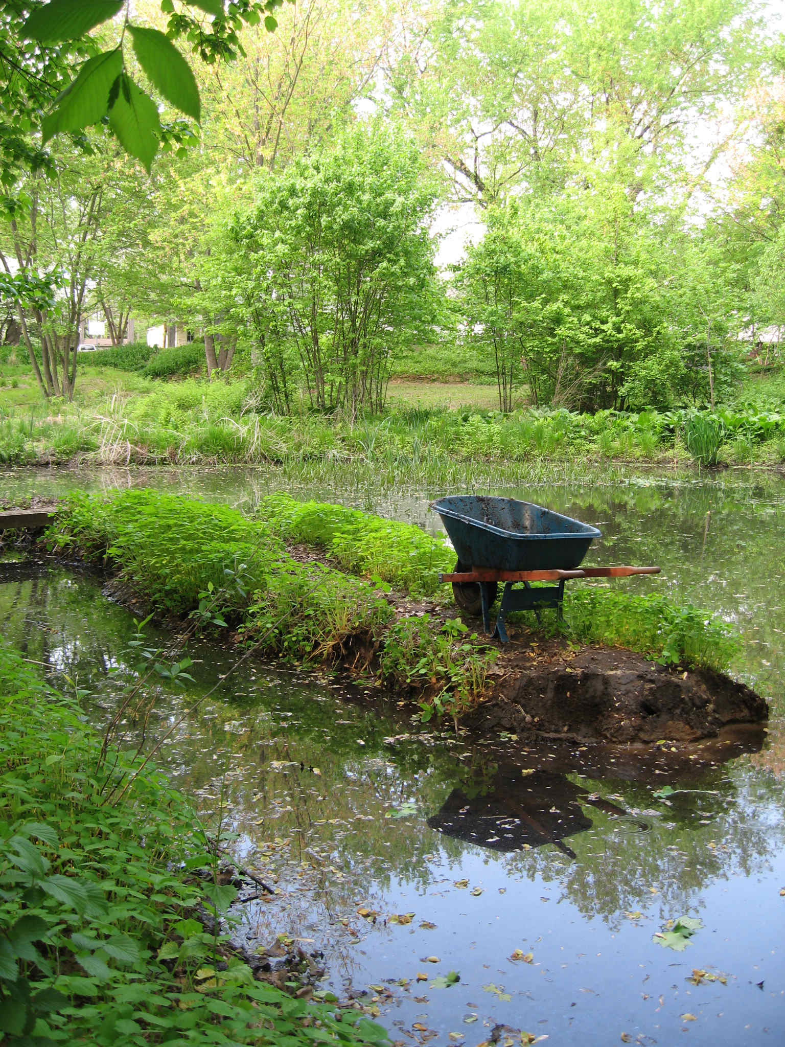 During 2008, we have been shrinking this small island at Synnott's Pond one wheelbarrow at a time in order to improve overall water circulation.