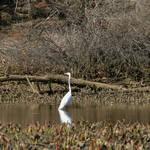 Highlight for Album: Birds of Mantua Creek