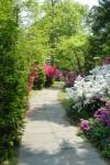 Borough Park in full bloom.
