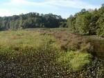 Mantua Creek marsh in early September.