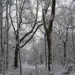 Snowy woods near the Mantua Creek