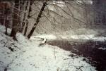 The 100-foot Bog Walk on the Monongahela Brook Trail crosses the remains of Greene's Lake.