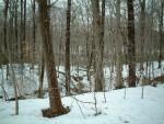 Woods along the Breakback Run Trail