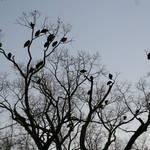 Highlight for Album: Vultures